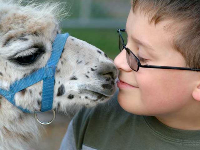 Boy with llama